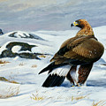 Golden Eagle by Dag Peterson