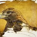 Golden Eagle Grunge Portrait by Eleanor Abramson