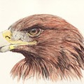 Golden Eagle by Morgan Fitzsimons