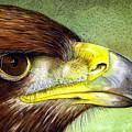 Golden Eagle by Paul Dene Marlor