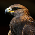Golden Eagle Strength by Sue Harper