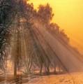 Golden Early Morning Sun Rays On The Farm Chesterhurst L B by Gert J Rheeders