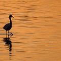 Golden Egret by Paul Neville