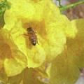 Golden Elder And Bee by Michael Fencik