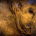 Golden Elephant by Doug Sturgess