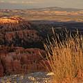 Golden Evening Light Bryce Canyon 1 by Mo Barton