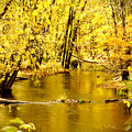 Golden Fall  by Greg Fortier