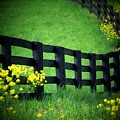 Golden Fence by Michael L Kimble