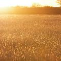 Golden Field by Mike Kelso