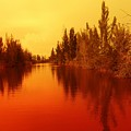 Golden Fire by Florene Welebny