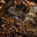 Golden Flow by Buck Buchanan