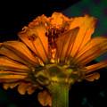 Golden Flower by Nilu Mishra