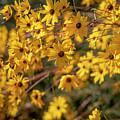 Golden Flowers by Jonathan Hansen