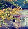 Golden Fall Foliage  by JAMART Photography