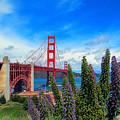Golden Gate Bridge Five by Tina M Wenger