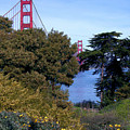 Golden Gate Bridge From Visitor Center by Michael Roll