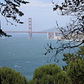 Golden Gate Bridge Through The Trees by Carol Groenen