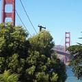 Golden Gate by Elizabeth Klecker