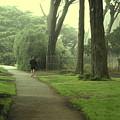 Golden Gate Park 06 by Pusita Gibbs