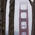Golden Gate Through The Trees by The Camera Junkies