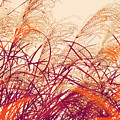 Abstract Pampas  by Stacie Siemsen
