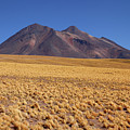 Golden Grasslands And Miniques Volcano Chile by James Brunker