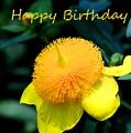 Golden Guinea Happy Birthday by Lisa Wooten