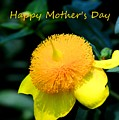 Golden Guinea Happy Mothers Day by Lisa Wooten