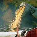 Golden Harvest by Cricket Hackmann