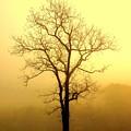 Golden Haze by Marty Koch