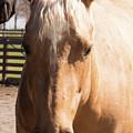 Golden Horse by Diane Schuler