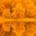 Golden Lake Reflections by Randy J Heath