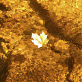 Golden Leaf In Water by Kevin Gladwell