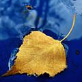 Golden Leaf by Mitko  Peroski