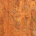 Golden Leaves by Carol Groenen