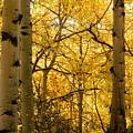 Golden Light by Darlene Blaher