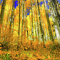 Golden Light Of The Aspens - Colorful Colorado - Aspen Trees by Jason Politte