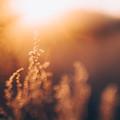 Golden Light by Tracy Jade