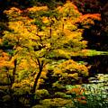 Golden Maple by Venetta Archer