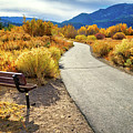 Golden Moments In Mammoth by Lynn Bauer
