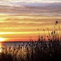 Golden Morning by Bob Cuthbert
