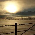 Golden Morning by DeeLon Merritt