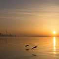 Golden Morning Flight by Georgia Mizuleva