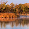 Golden Morning Shoreline Pano by Patti Deters