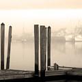 Golden Mornings by Paul Boroznoff