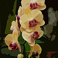 Golden Moth Orchid by Michael Cummings