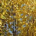 Golden October by Valerie Ornstein