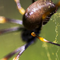 Golden Orb Spider by Jorgo Photography - Wall Art Gallery