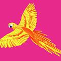 Golden Parrot by Dimitrov Artist