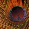 Golden Peacock by Yvette Pichette